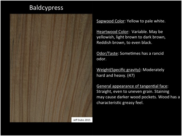 baldcypress_tan