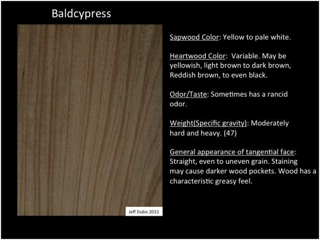 baldcypress_tan