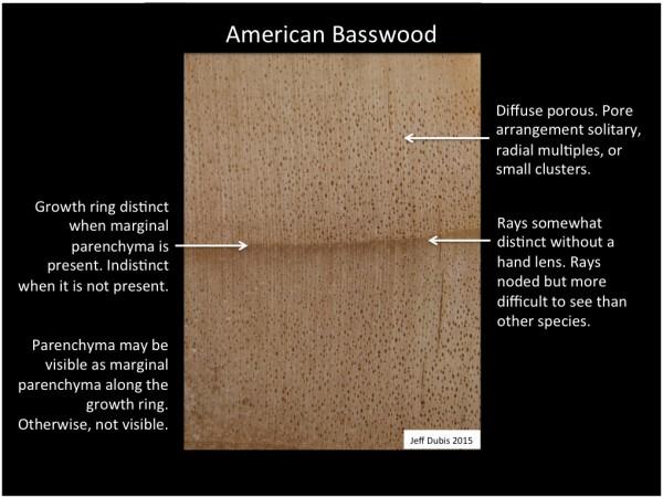 basswood_cs