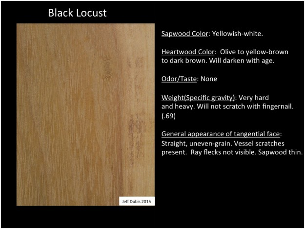 Blacklocust_tan
