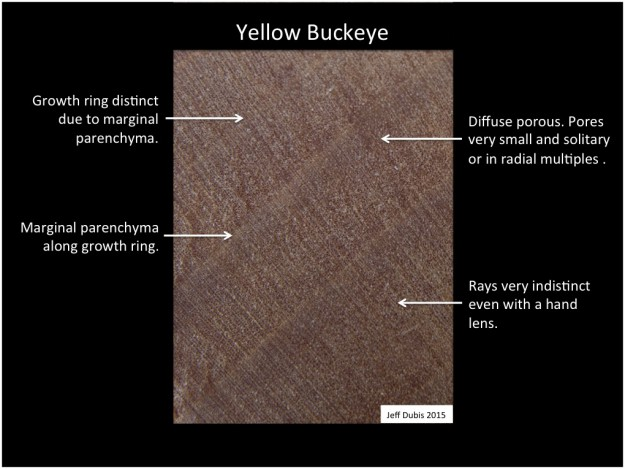 buckeye_cs