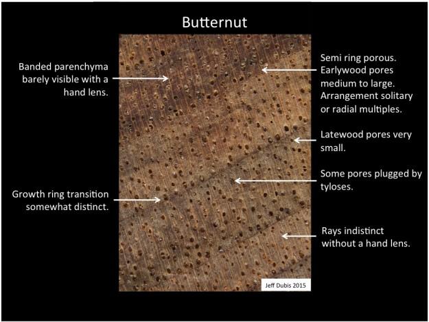 butternut_cs