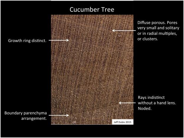 cucumber_cs