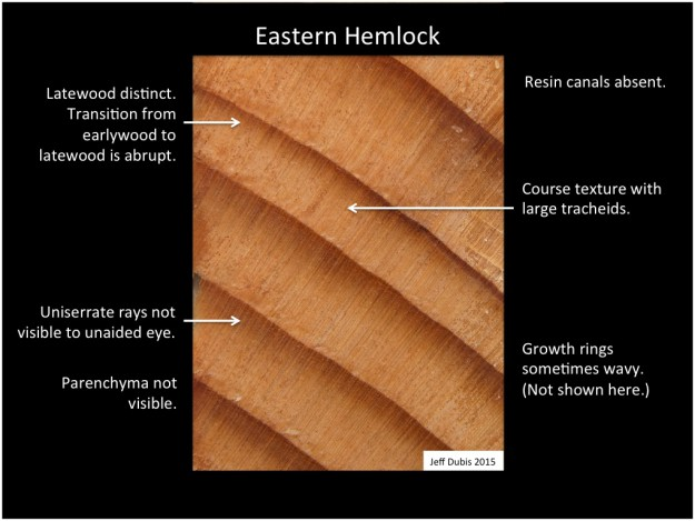 easternhemlock_cs