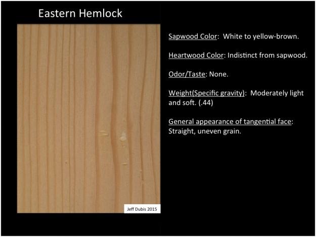 easternhemlock_tan