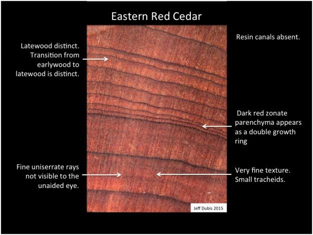 easternredcedar_cs