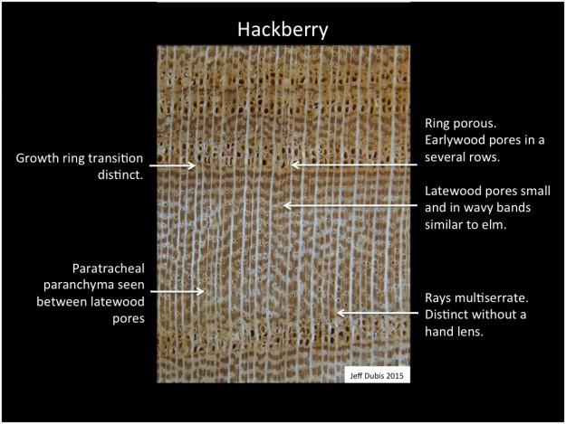 hackberry_cs