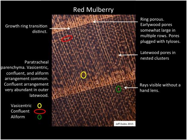 mulberry_cs