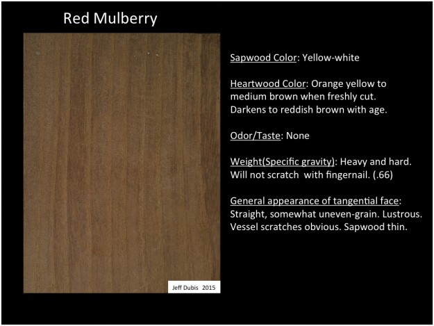Mulberry_tan