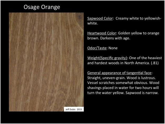 Osage Orange Identification Of Common North American Woods
