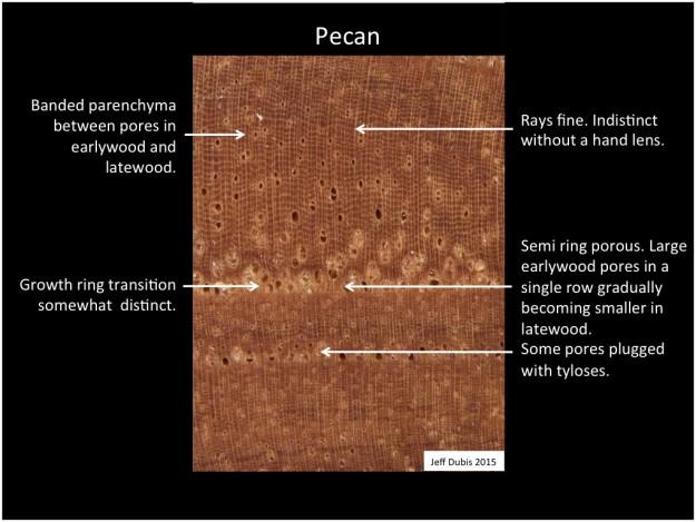 pecan_cs