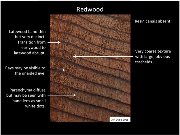 redwood identification of common north american woods