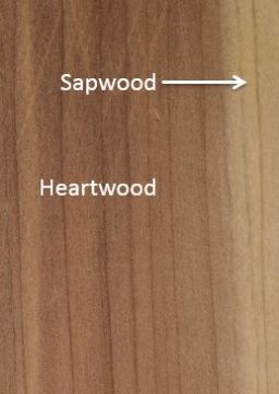 sapwood_heartwood