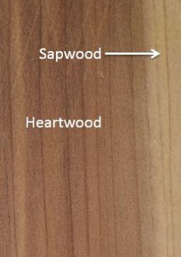 sapwood_heartwood