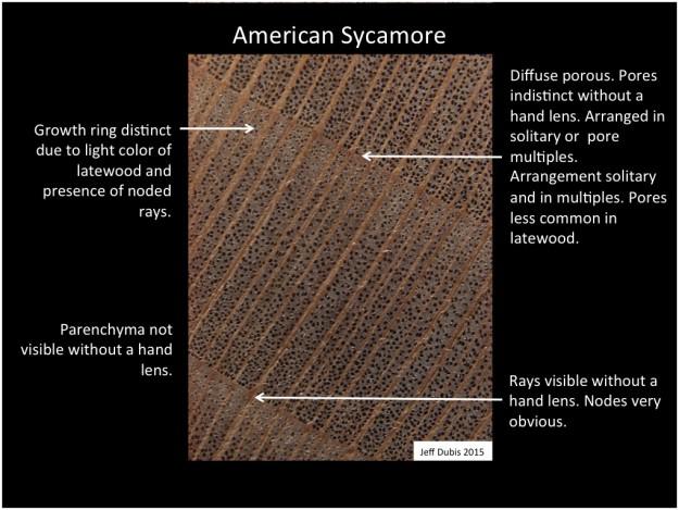 sycamore_cs