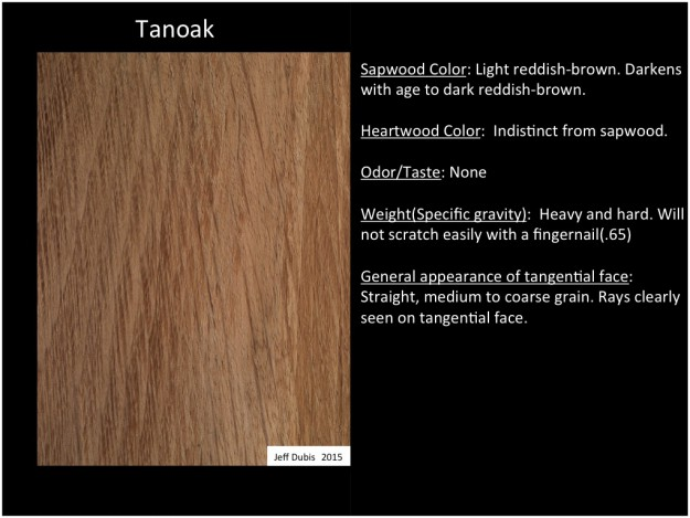 tanoak_tan