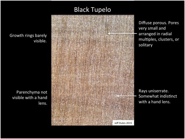 tupelo_cs