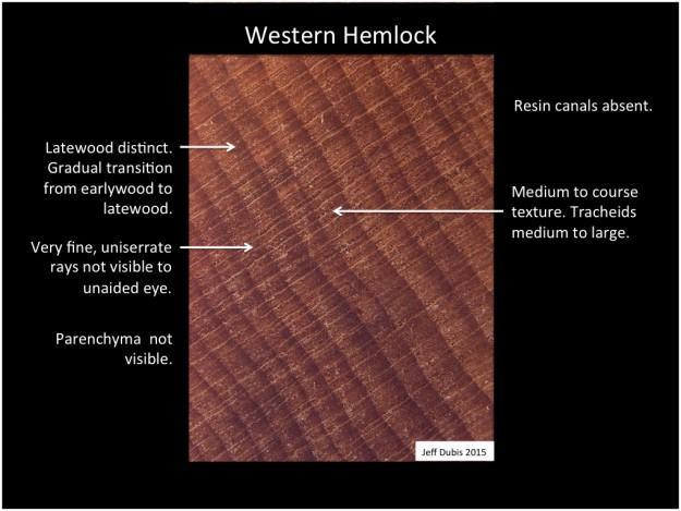 westernhemlock_cs