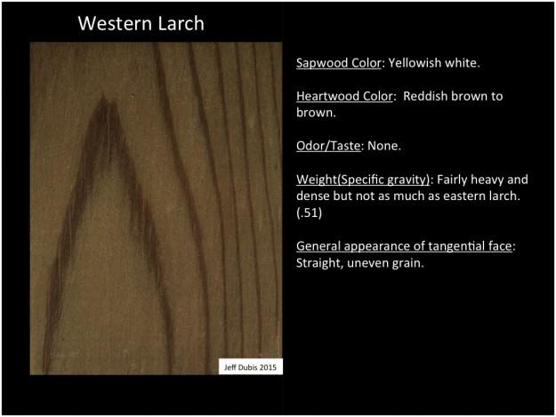 westernlarch_tan