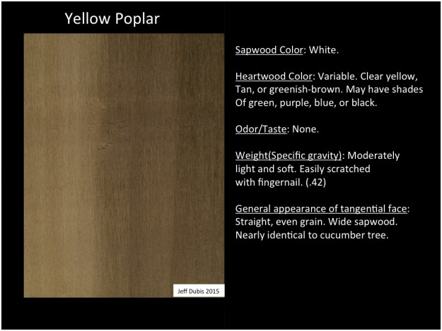 yellowpoplar_tan