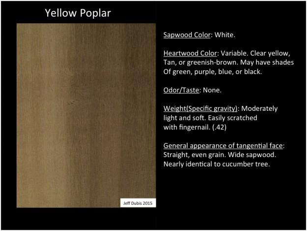 yellowpoplar_tan